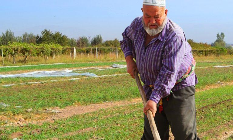 Мужчина, работающий в поле в Таджикистане