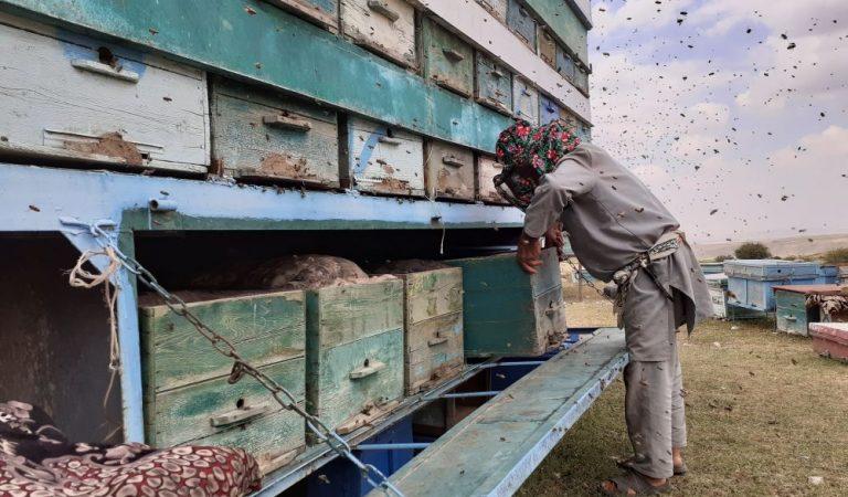 Депутати асалпарвар: 60 соли зиндагӣ дар иҳотаи қуттиҳои занбӯри асал