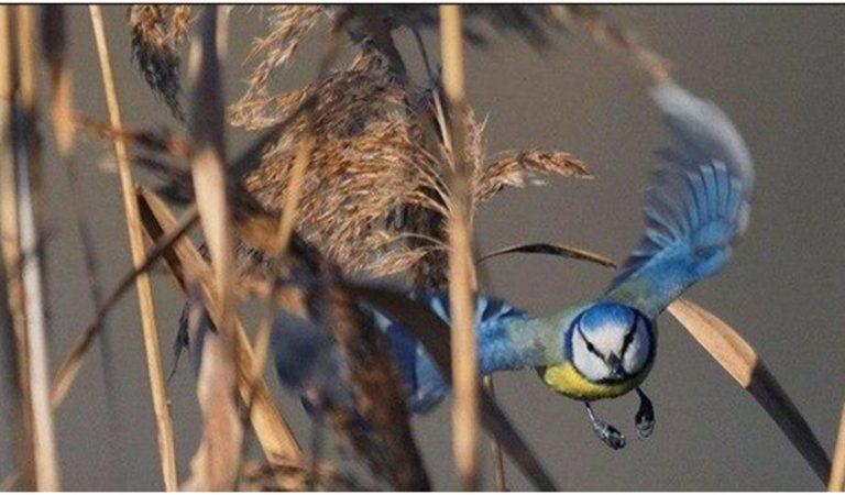 Куда любовь к птицам приведет. Откуда в Таджикистане клуб бёрдеров и кто они такие