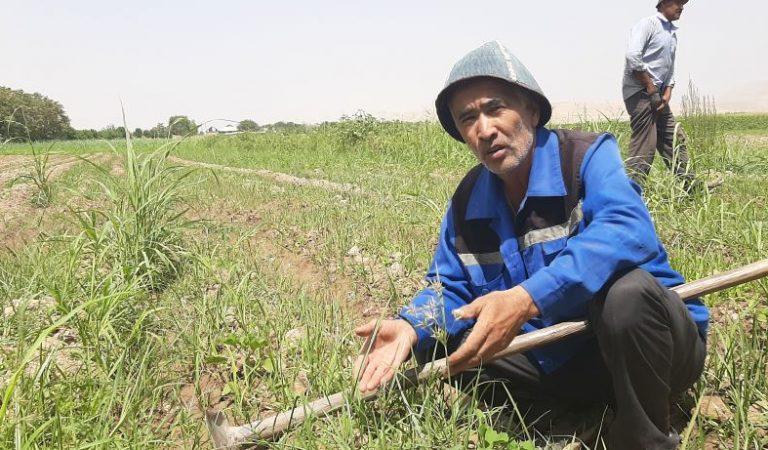 Морковь по цене банана. Почему так подорожала самая дешевая в Таджикистане сельхозкультура